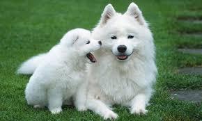 Köpeklerin Beden Dili Resimli Köpeklerin Beden Dili Resimli Köpeklerin Beden Dili Resimli K  peklerin Beden Dili Resimli 1