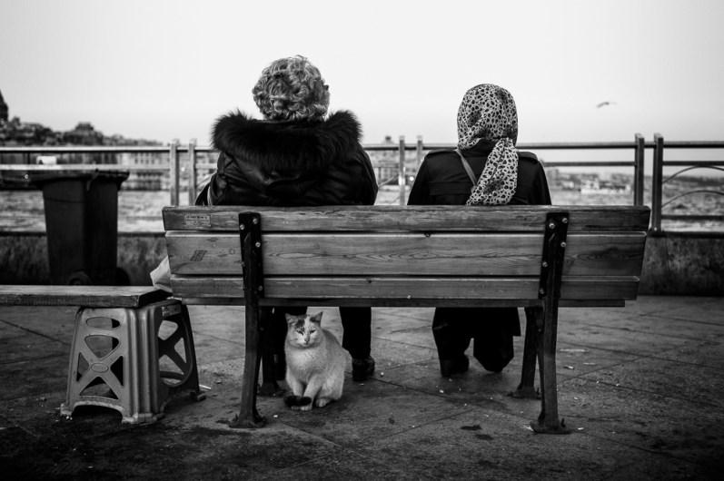 Istanbul, street photographers, street photography, Leica M Monochrom, travel, cats