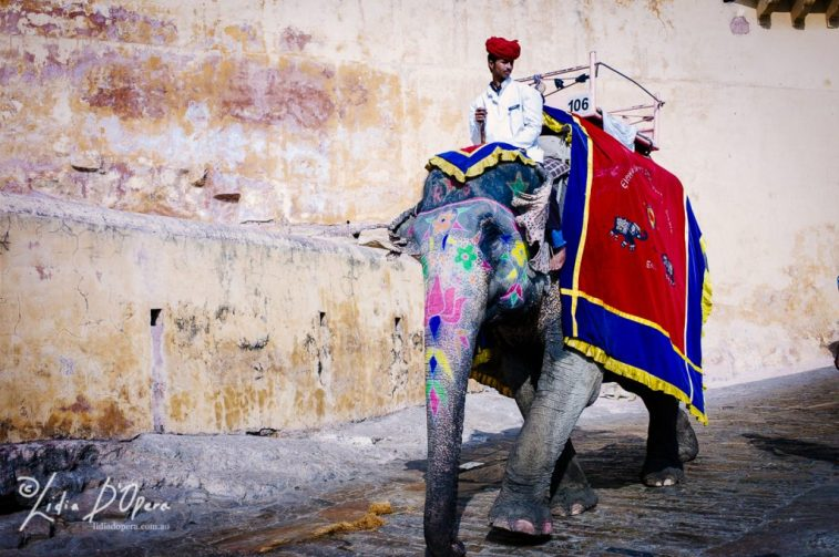 Jaipur-M91016149