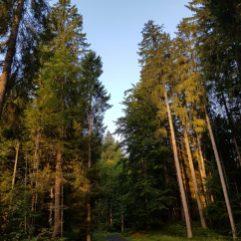 Augen auf! Sinne an! Frühmorgens im Wald. Hier entstehen die besten Gespräche.