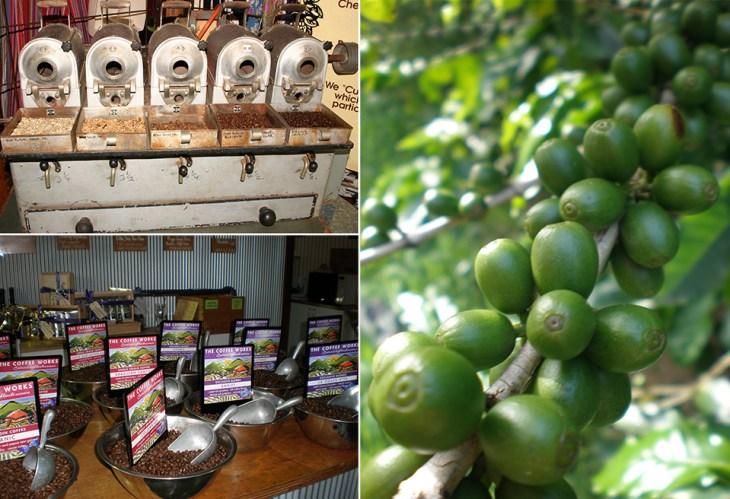 Kaffee-Plantagen | Australien Ostküste Reisetipps | Reisebericht