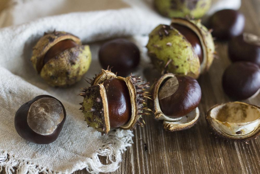 Aktivitäten im Herbst mit Kindern: Kastanien sammeln | Herbst Bucket List: 30+ Ideen