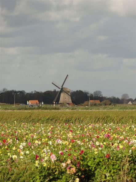 Radtour von Koedijk nach Alkmaar