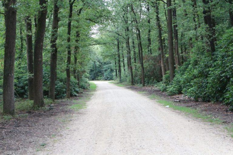 park berg en bos