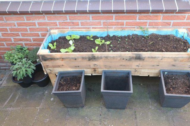 achtertuin moestuin bak, plantenbak
