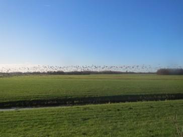 ganzen,wielanden,vorst,vaart,Friesland