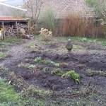 tuin,lente,opgekuild,woest