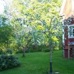synchroonkijken,waarde,Zweden,Tolvsbo,2015,appelboom