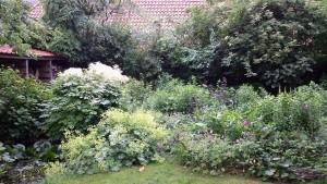 grote tuin,juni 2015