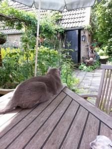 Petter,Burmees,tuin,juli 2015