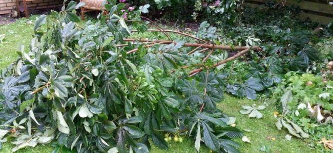 zomerstorm 25 juli 2015,kastanjetak,tuin