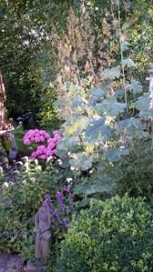 augustus,tuin,zomer,2015,hortensia's
