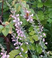 tuinbank,augustus,zomer,
