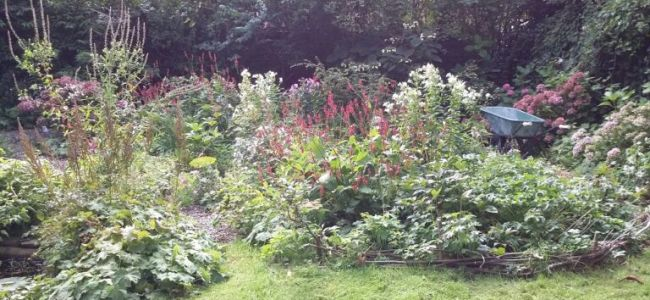 tuin,weer thuis,september,2015