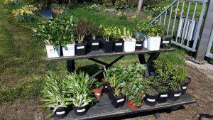 fietsen,onderweg,plantjes,kopen,april,2016