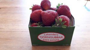 Zweden,Tjörn,aardbeien,Lekander,B&B,juni,2016