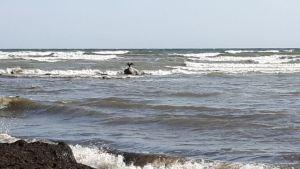Denemarken,Møn,strandjes,zee,augustus,2016