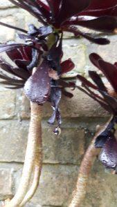 regen - vetplant