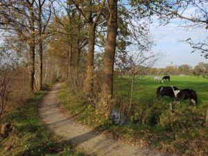 Fietsen door het bos van Lippenhuizen, Friesland