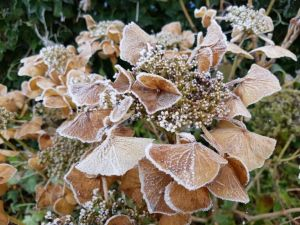 December '17 - rijp in de tuin