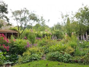 de tuin in juli, acanthussen en hortensia's