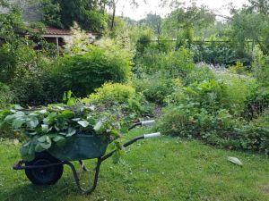 De tuin is geëxplodeerd!