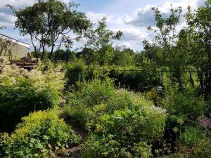 tuin, braakliggend terrein, uitzicht