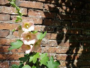 Zomer - zomer in mijn tuin vol bloemen