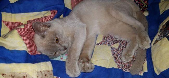 Prins Pommel – een Prinsje met vier pootjes!