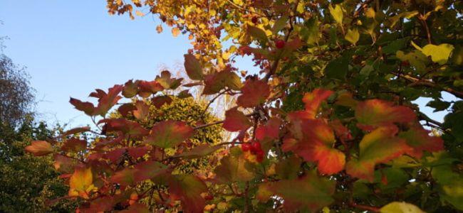 Covid19 - herfst, de 2e golf en een elektrische driewieler