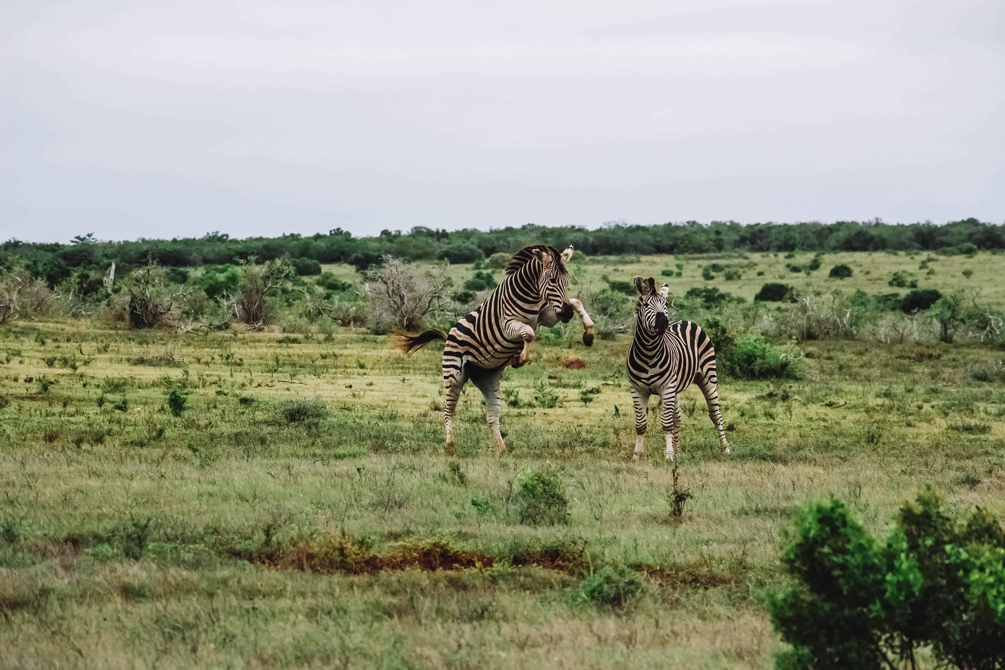 safari met kleine kinderen in Zuid-Afrika