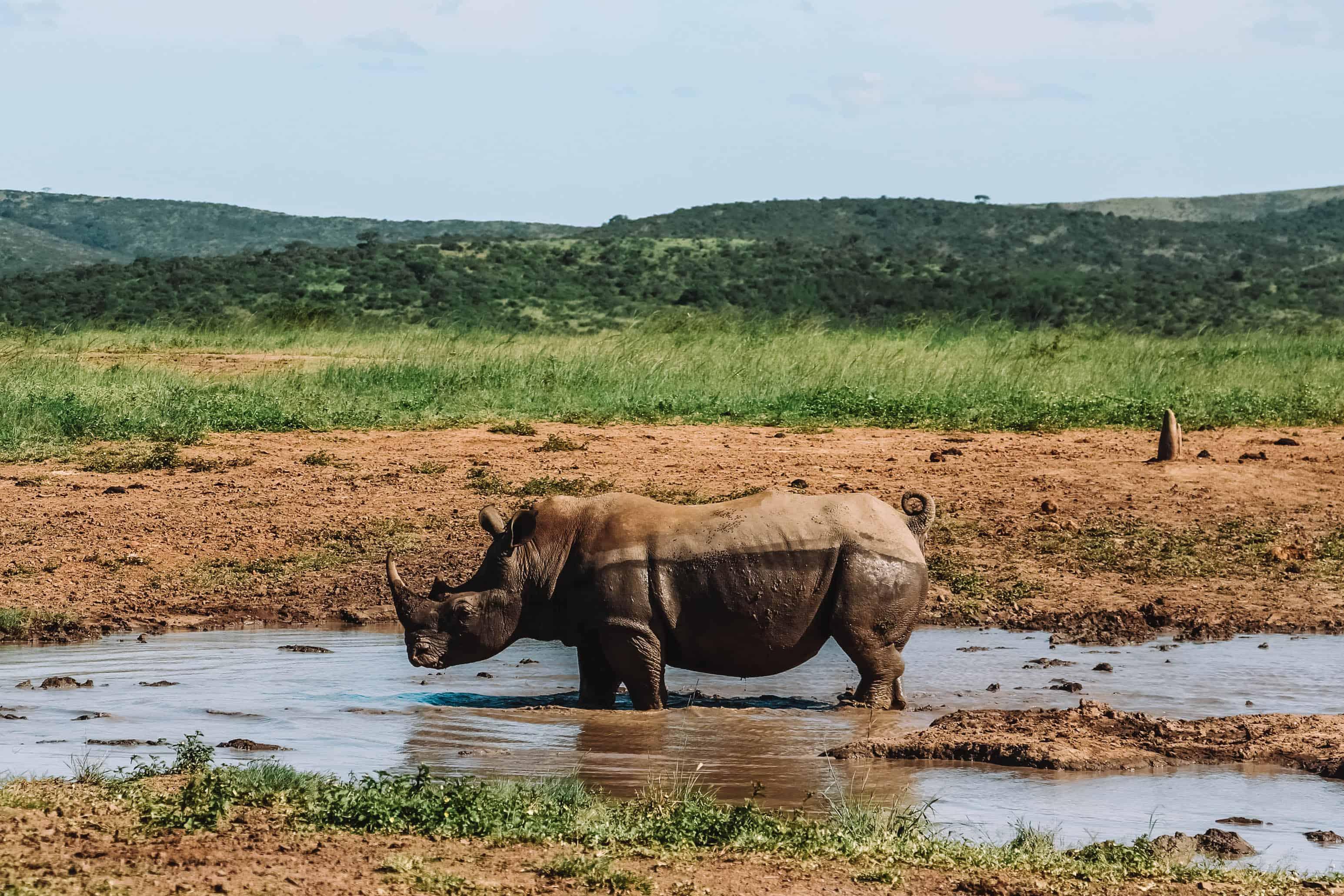 de big five spotten met kleine kinderen safari in Zuid-Afrika