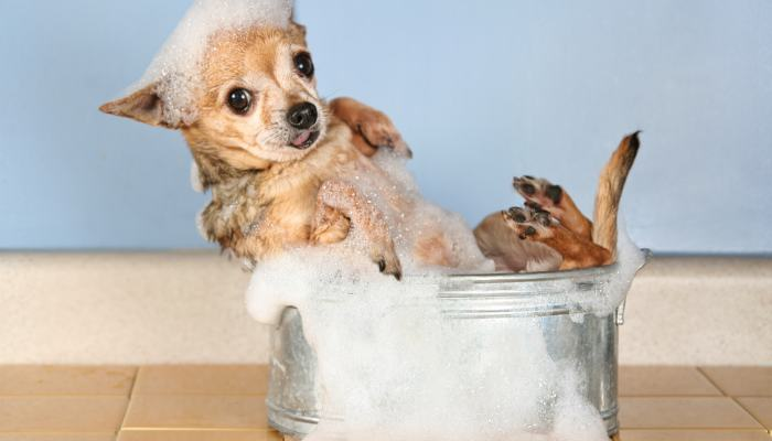 How to Keep your Dog Clean! (Without the Hassle of Bath Time)