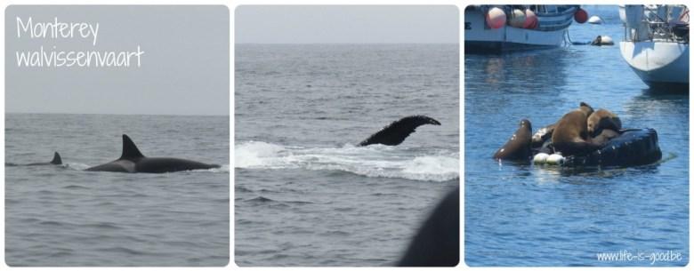 monterey walvissen