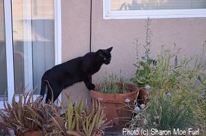 High desert gardening