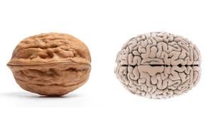 Walnut-BrainFoods-That-Look-Like-Body-Parts