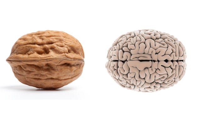 Walnut-BrainFoods-That-Look-Like-Body-Parts