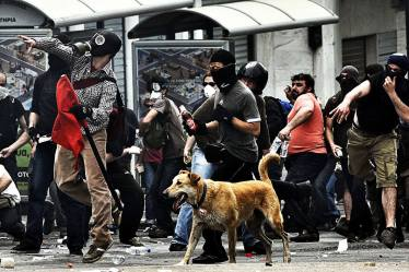 09-The Story of Loukanikos and Other Greek Riot Dogs