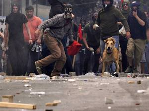 15-The Story of Loukanikos and Other Greek Riot Dogs