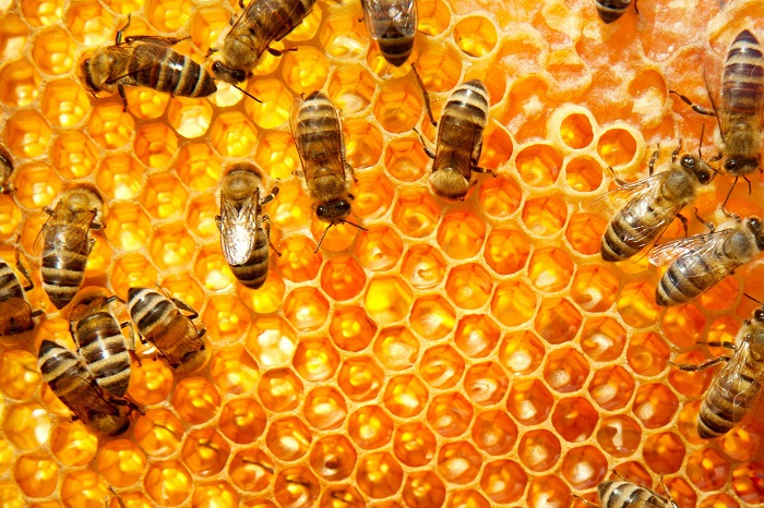 Bees Are All Disappearing