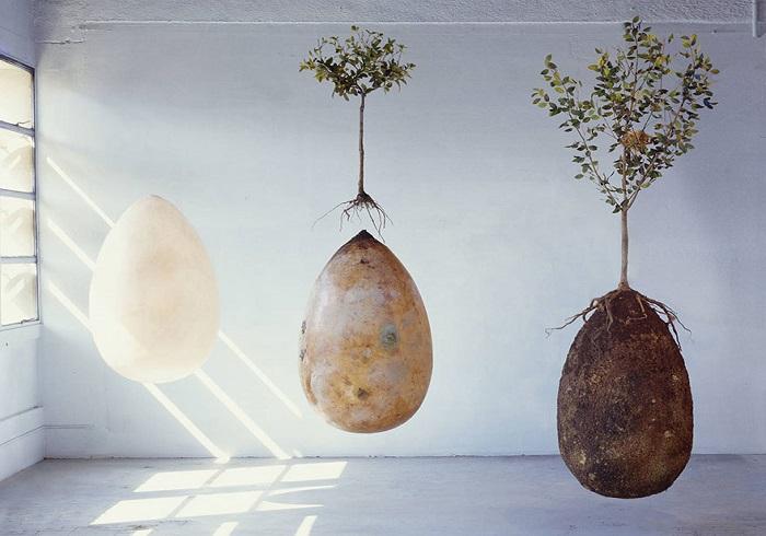 Organic Burial Capsules