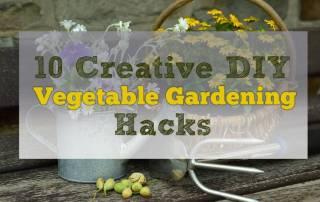Creative DIY Vegetable Gardening Hacks