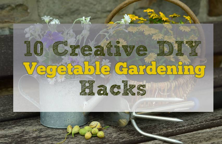 Creative DIY Vegetable Gardening Hacks