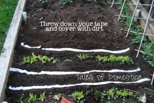 Make your DIY seed tape