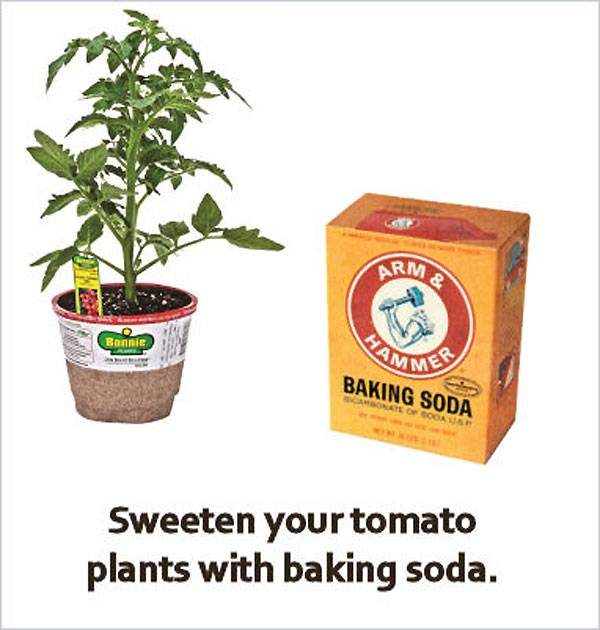 Use baking soda for sweeter tomatoes