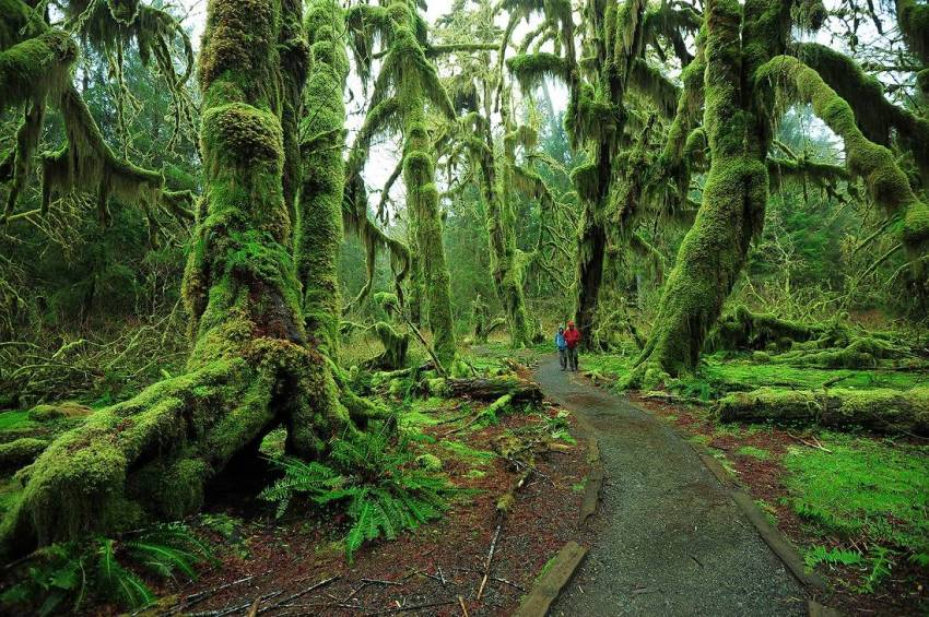Hoh Rain Forest, Washington, USA