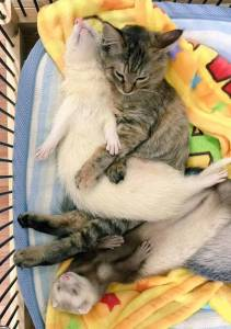 rescue-kitten-komari-ferret-brothers-57
