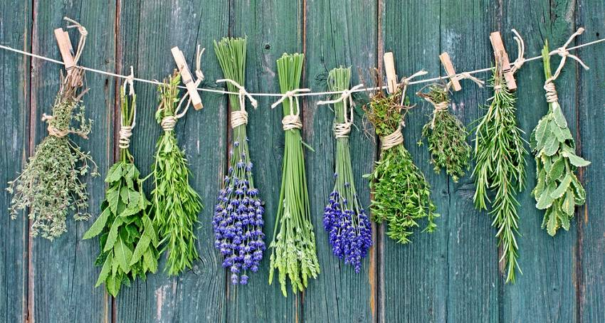 Medicinal Plants You Can Grow at Home