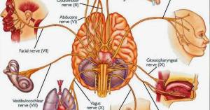 Naturally Stimulate Vagus Nerve