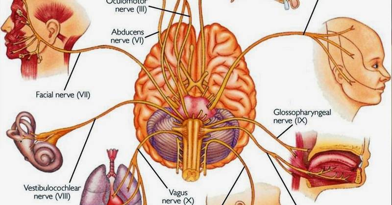 Naturally Stimulate Vagus Nerve